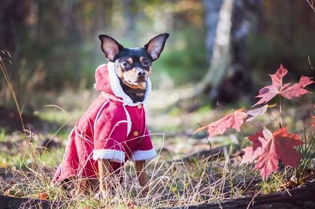 Построение выкроек и пошив одежды для собаки самостоятельно собственноручно