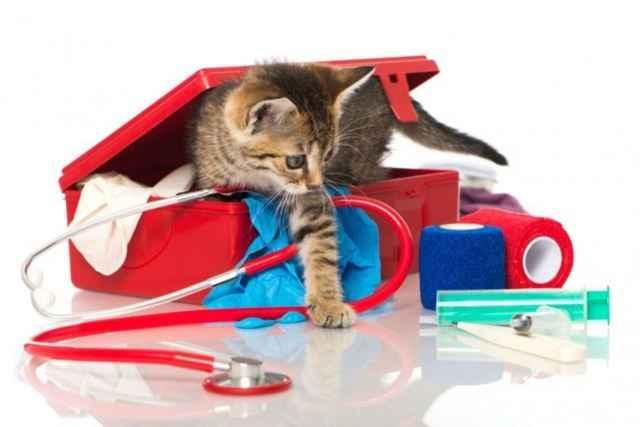 Как нужно правильно применять глазные и ушные капли Максидин для кошки