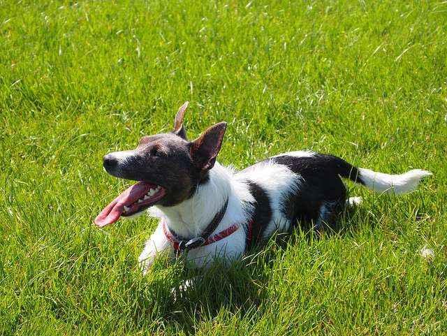 Присутствуют ли у собак потовые железы и способны ли питомцы потеть
