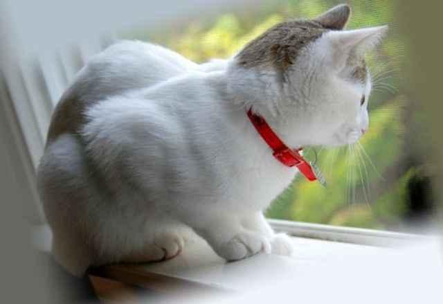 Опасность клещей для кошек: что можно сделать если укусил домашнего питомца