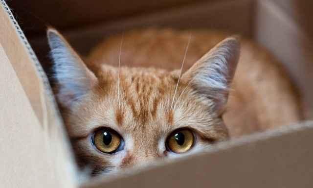 Что сделать чтобы кот перестал метить в доме и квартире где попало