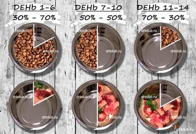 Рекомендации по переводу собаки с натурального питания на сухой корм