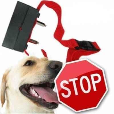 Обзор и эксплуатация ультразвуковых ошейников Антилай с электрошоком для собаки