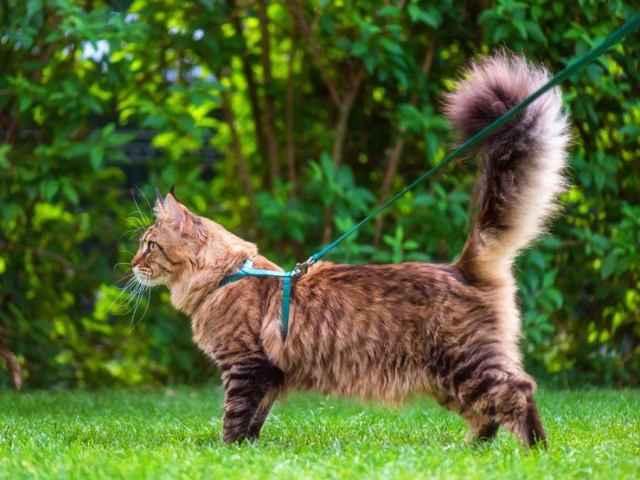 Болеют ли кошки пироплазмозом: описание симптомов, методы лечения