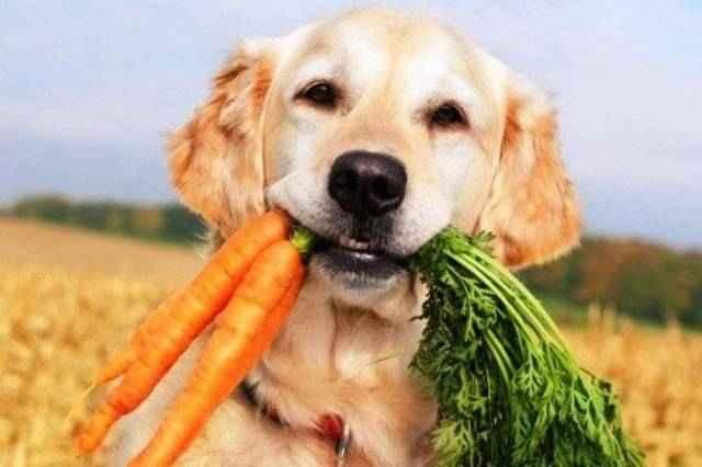 Причины запоров у собак: чем кормить, если не может сходить по-большому