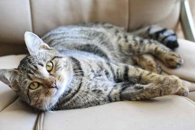 Подробный обзор и способ применения успокоительных средств для кошки