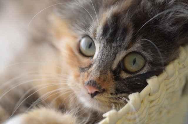 Что значит если кот не кушает, отказывается от воды, постоянно лежит вялый