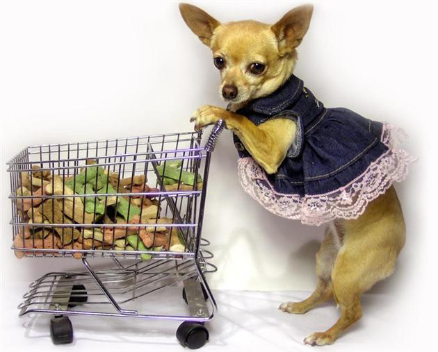 Подробный обзор кормов типа d/d и i/d от фирмы hills для мелких собак
