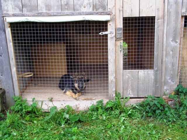 Обзор всех разборных разновидностей теплых уличных вольеров для собак