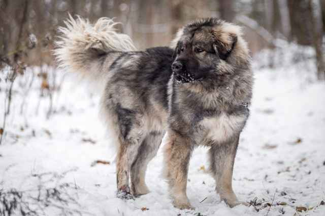Познавательный рейтинг из 10 самых агрессивных пород собак во всем мире