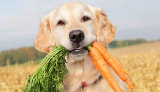 По каким причинам щенок или взрослая собака может есть землю на улице