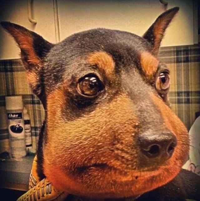Что нужно сделать после укуса собаки пчелой или шмелем в домашних условиях