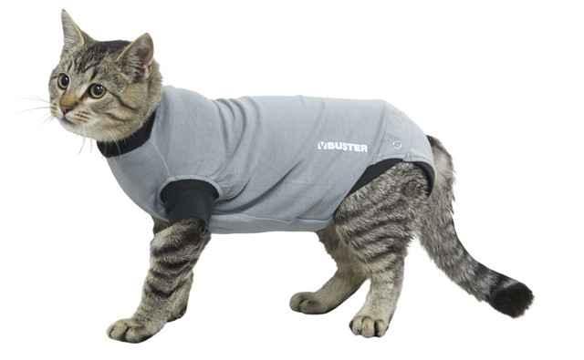 Как лечить пупочную грыжу у котят и взрослых кошек в домашних условиях