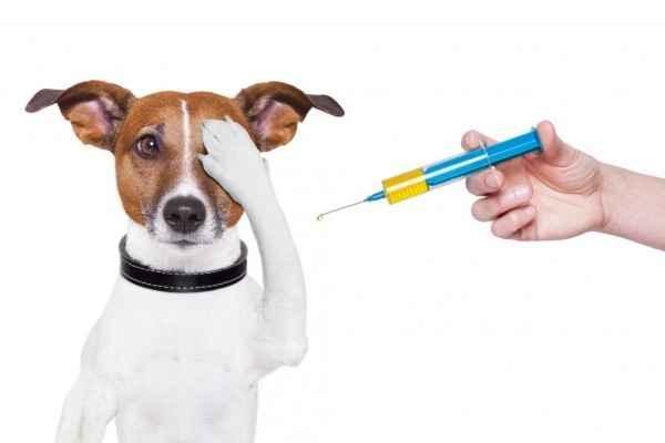 Когда собакам делают прививки: график в зависимости от возраста в таблице