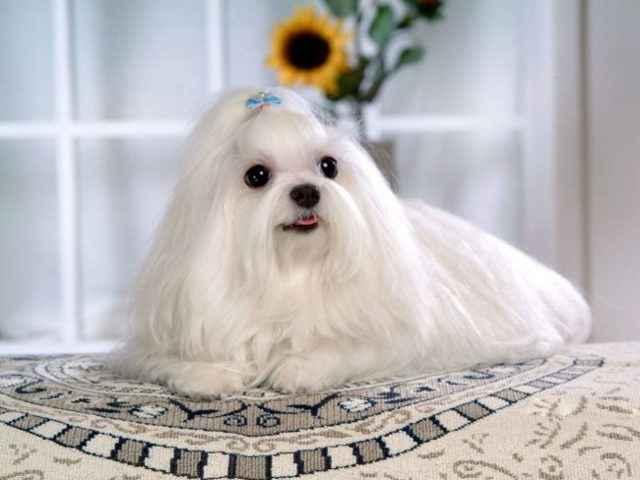 Обзор самых добрых и дружелюбных пород собак в мире, которые подойдут детям