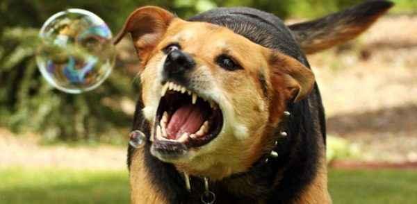 Какими должны быть носы у полностью здоровых собак: мокрые или сухие