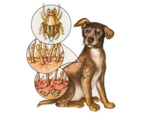По каким причинам у щенка или взрослой собаки могут появлиться прыщи на животе