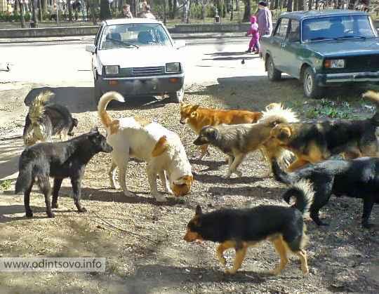Какие службы занимаются отловом бродячих собак: куда звонить по этому поводу
