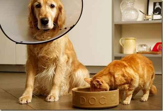 По каким причинам собаки не едят и длительное время отказываются от еды