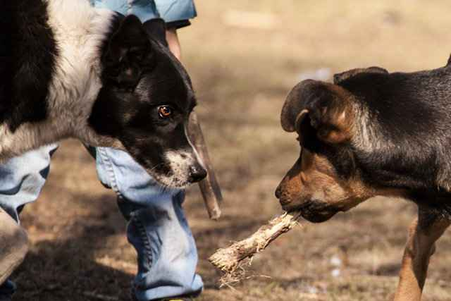 Как правильно ругать и наказывать собаку за очередное непослушание