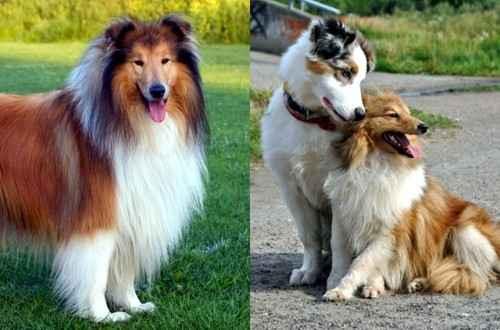 Когда перед плановой прививкой собаке, нужно обязательно провести глистогонку