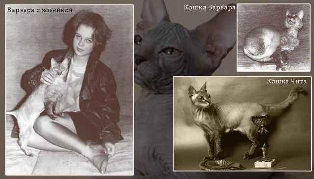 Кошки донские сфинксы: описание породы, характер, особенности ухода, история