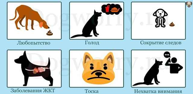 По каким причинам собаки кушают свой кал: что делать если пес ест экскременты