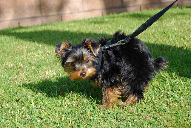 Почему собаки и щенки перестают какать: чем помочь при отсутствии стула