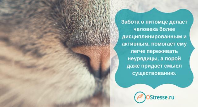 Советы психологов о том как смириться и пережить потерю собаки после смерти