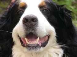 Каким должно быть нормальное количество зубиков у собаки: размещение и размеры