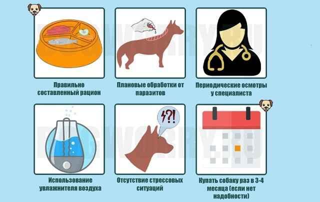 Почему у собаки появилась перхоть на спине: какими шампунями мыть питомца
