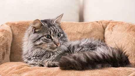 Как можно узнать о беременности у кошки: симптоматика и внешние признаки