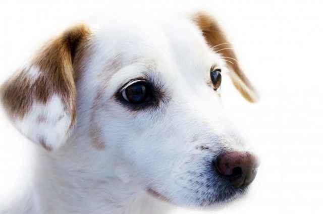 Причины частого мочеиспускания у собак: почему много ходит в туалет