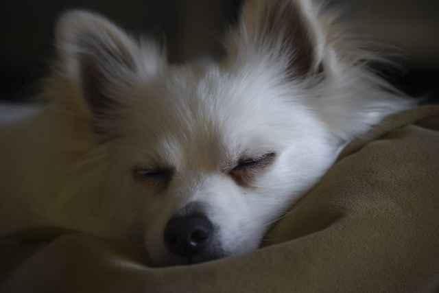 Что означает сильное урчание в животе у собаки: что нужно делать в таком случае
