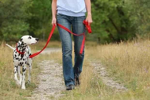 С кем можно оставить собак, если хозяин собирается в отпуск на несколько дней