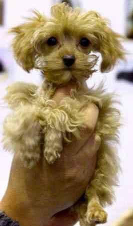 Описание питероских орхидей: внешность и характер этой породы собак