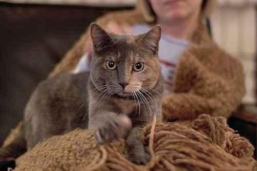 Причины почему коты могут топтать лапками человека: варианты зачем это делается