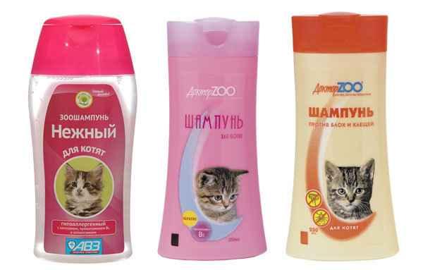 Варианты с какого возраста можно купать котят и как правильно это делать