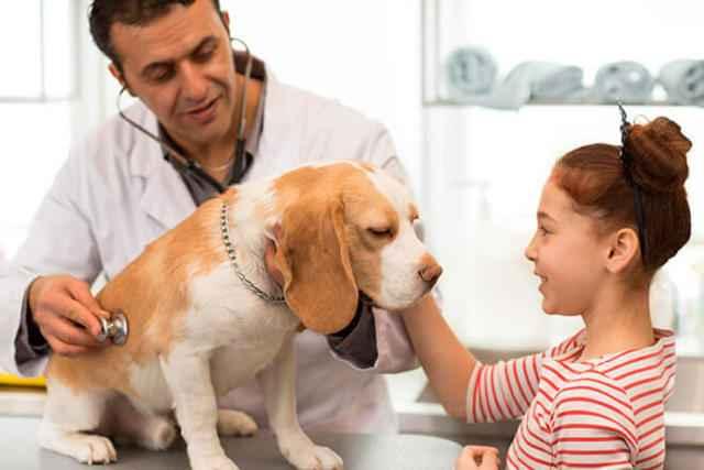 По каким причинам у собак кал может становиться темного или черного цвета