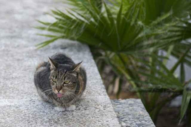 Почему кошки высовывают и показывают язык: когда спят и в других случаях