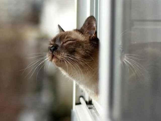 Варианты примет о кошках: выпала из окна, умывается, подобрали с улицы и другие