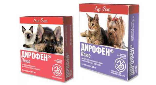Как правильно применять суспензии и таблетки Дирофен для кошки и котят