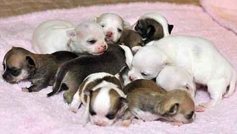 В каком возрасте обычно открываются глаза у щенков после рождения