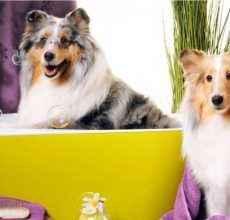 Методики и порядок избавления от неприятного запаха от собаки дома