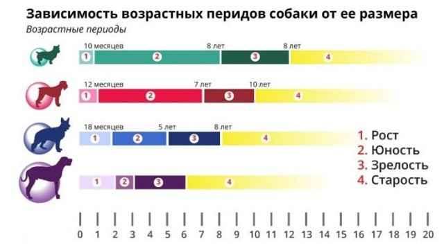 Средняя продолжительность жизни собак разных пород: данные в таблице