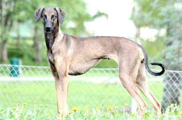 Какие существуют собаки средних размеров: список и описание пород