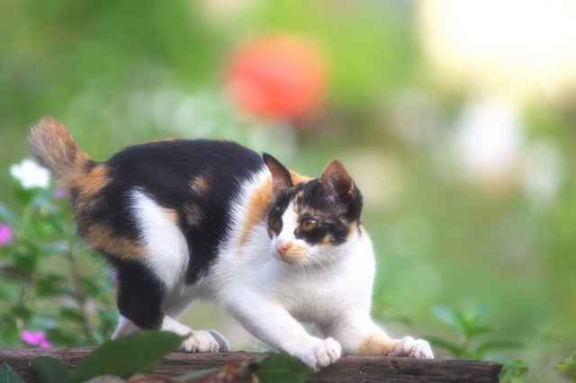 Факторы облысения ушей у кошек: примеры лечения животного и профилактики