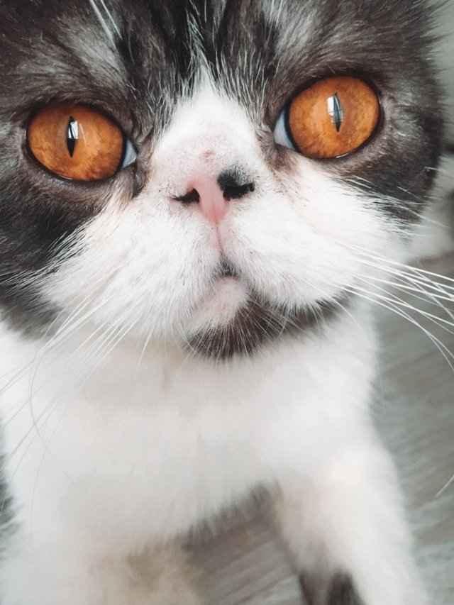 Описание симптомов панкреатита у кошки: способы лечения, препараты