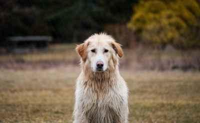 Польза и вред молока для собак: разрешается ли давать щенкам и взрослым