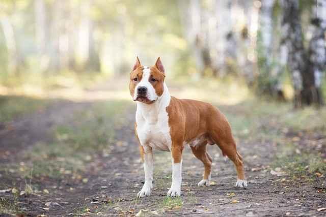 Какая самая большая сила укуса у собак: породы с мощными челюстями